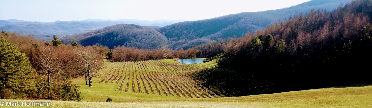 vineyard in the Appalachian mountains